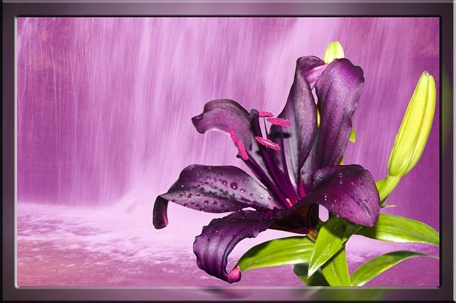 ¨fialová květina