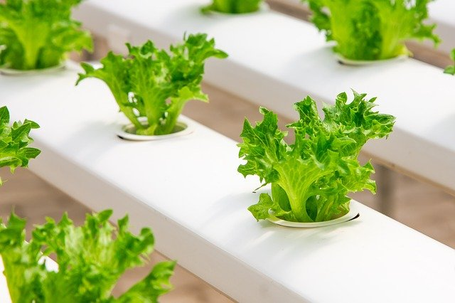 skleníkové rostlinky